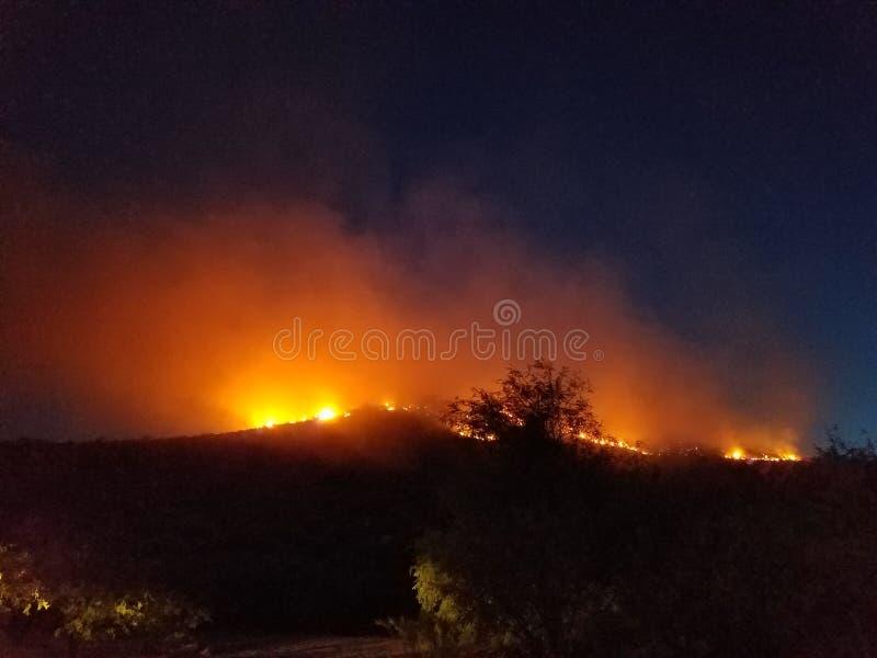Le feu de forêt de l'Arizona photographie stock libre de droits