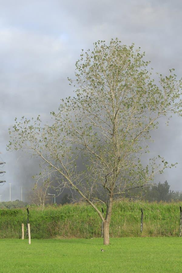 Le feu derrière l'arbre photos stock