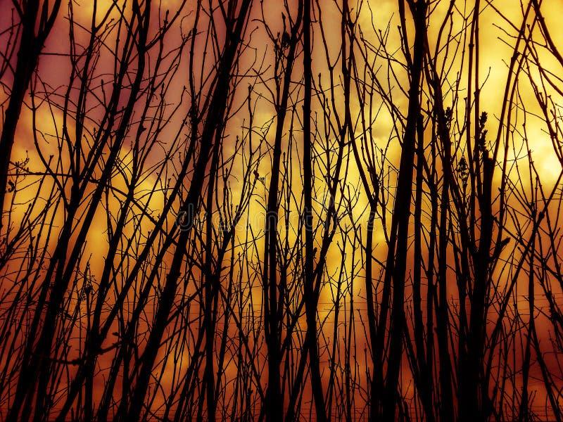 Le feu et fumée dans la forêt image stock