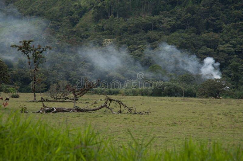 Le feu ouvert dans une forêt photos stock