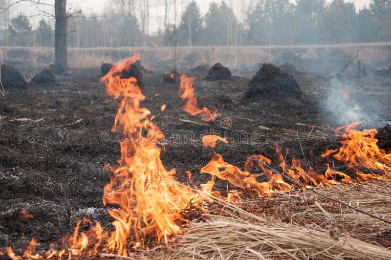 Le feu sur l'herbe s?che For?t pazhar photos libres de droits