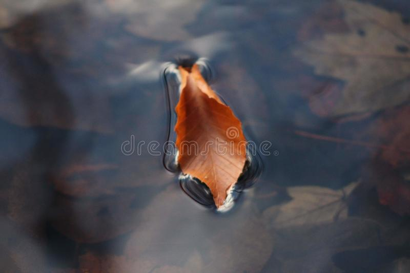Le feuillage d'automne a courbé le flotteur photos stock