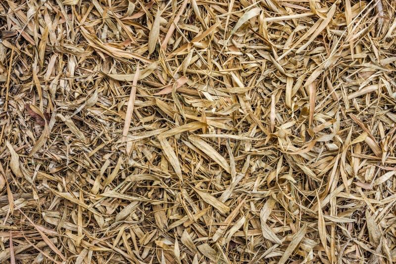 Le feuillage d'automne des feuilles sèches de bambou s'est laissé tomber sur une terre photographie stock libre de droits