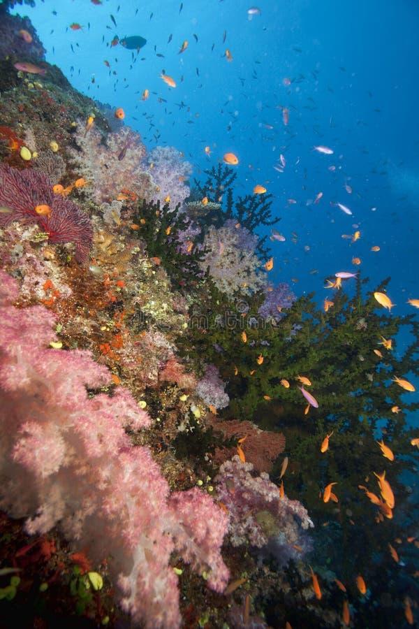 Le Fiji sous-marin photographie stock libre de droits
