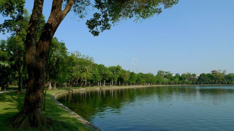 Le file degli alberi verdi illuminano il lago fotografie stock libere da diritti