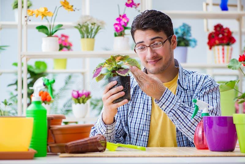 Le fleuriste de jeune homme travaillant dans un fleuriste photos libres de droits