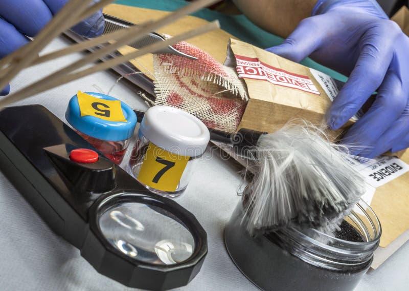 Le flic de spécialiste examine le morceau de tissu taché de sang appartenant à la victime de meurtre images stock