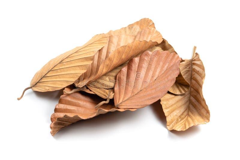 Le foglie asciutte accatastano isolato fotografie stock