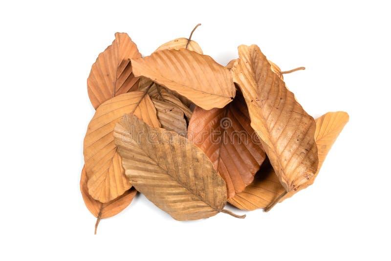 Le foglie asciutte accatastano isolato fotografia stock libera da diritti