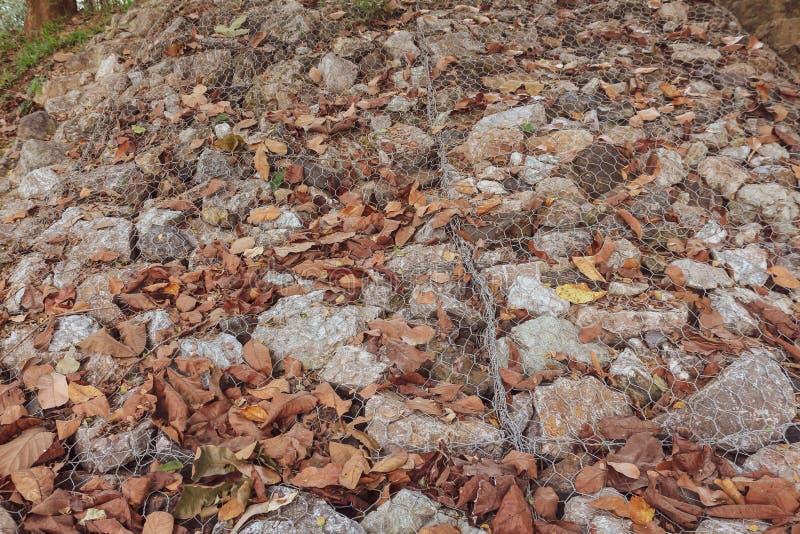 Le foglie asciutte cadono sulla cresta di una roccia fotografia stock libera da diritti