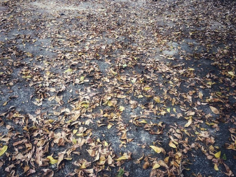 Le foglie asciutte cadute hanno interrotto sul pavimento del cemento immagine stock