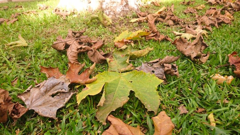 Le foglie cadono nella stagione di autunno fotografie stock