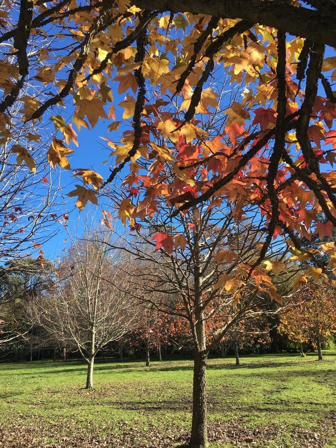 Le foglie cadono nella stagione invernale immagini stock libere da diritti