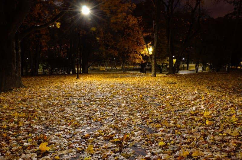 Le foglie cadute autunno si trovano sul percorso in un parco della città immagini stock libere da diritti