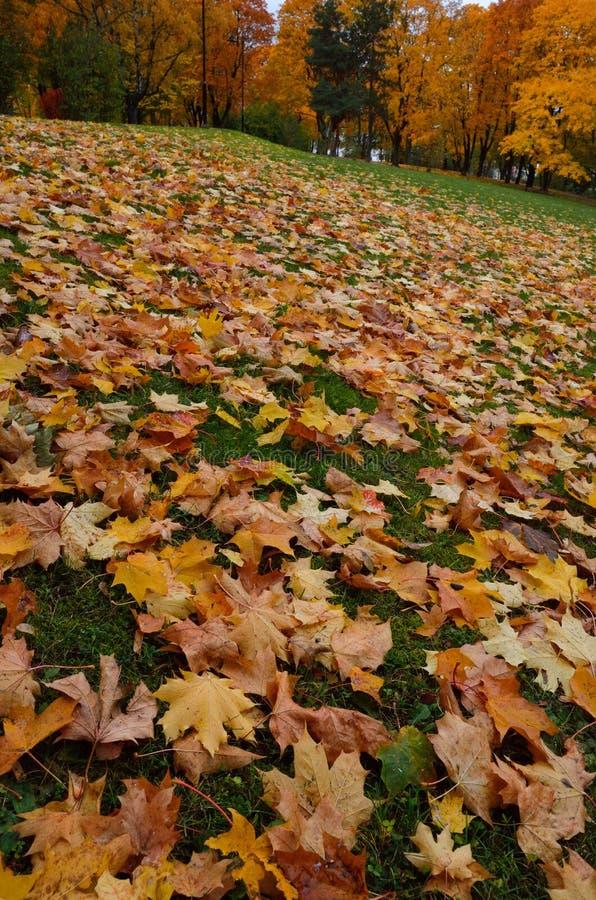 Le foglie cadute autunno si trovano sull'erba verde immagine stock libera da diritti