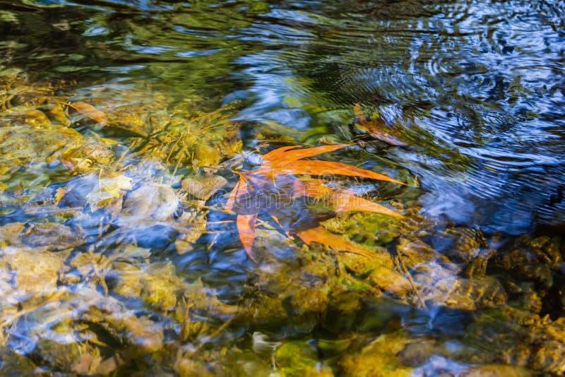 Le foglie cadute si trovano sott'acqua sul fondo del fiume fotografia stock libera da diritti