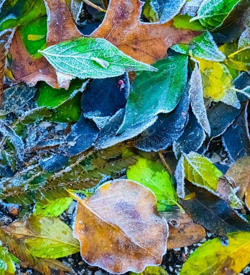 Le foglie congelate variopinte di caduta hanno catturato su terra, estratto delle nature immagini stock