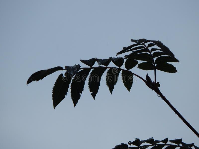 Le foglie degli alberi sono il loro passaporto personale fotografie stock libere da diritti