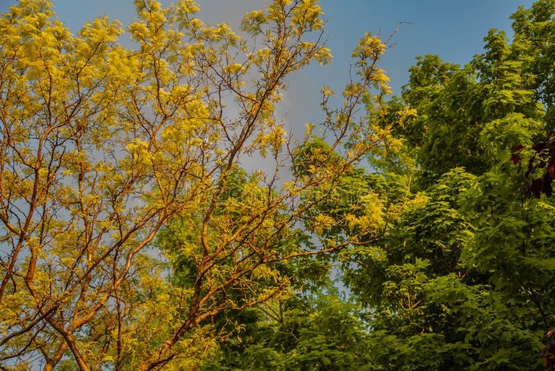Le foglie degli alberi sono per la guarigione delle nazioni fotografie stock