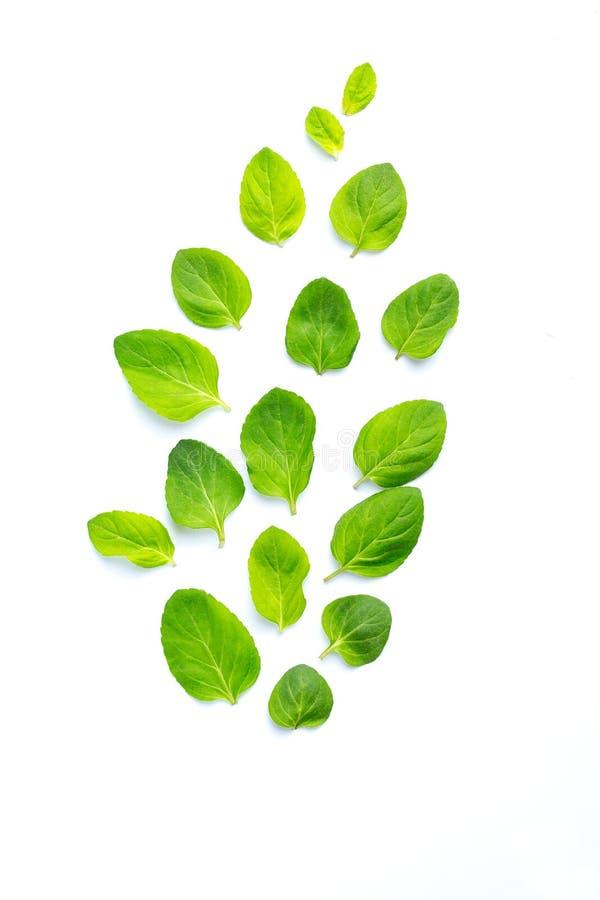 Le foglie della menta fresca sono presentate su un fondo bianco volo Le foglie modellano, vista superiore fotografia stock libera da diritti