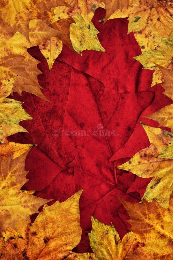 Le foglie di acero asciutte rasentano il fondo rosso scuro fotografie stock