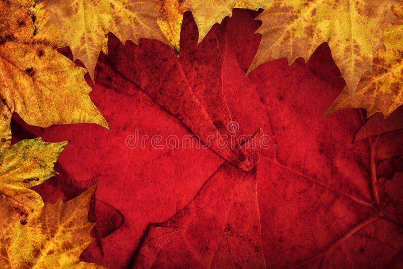 Le foglie di acero asciutte rasentano il fondo rosso scuro fotografia stock