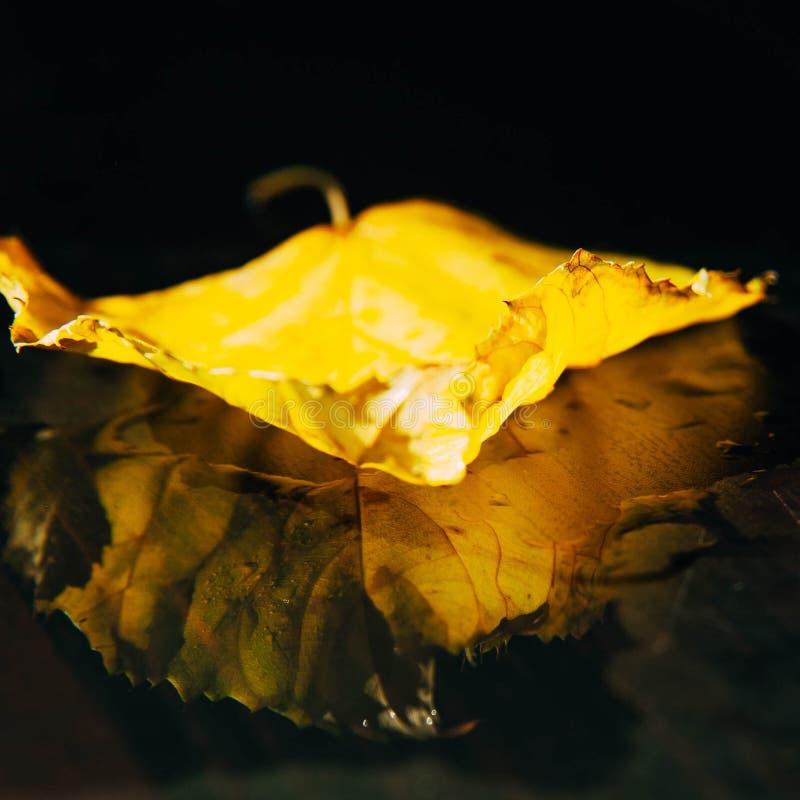 Le foglie di autunno gialle e verdi degli alberi incorniciano la composizione sulla a immagine stock