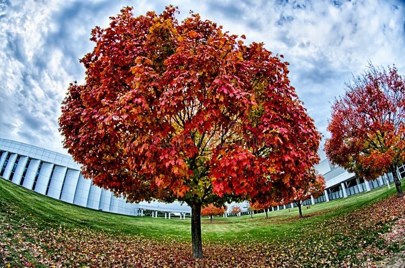 Le foglie di autunno gialle ed arancio e rosse nella bella caduta parcheggiano fotografie stock libere da diritti