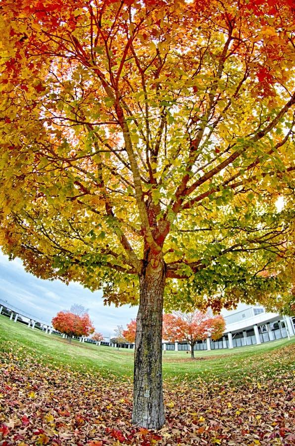 Le foglie di autunno gialle ed arancio e rosse nella bella caduta parcheggiano fotografia stock libera da diritti
