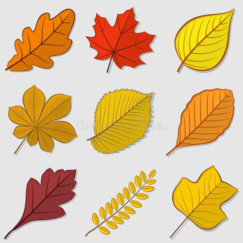 Le foglie di autunno hanno messo, isolato su fondo bianco illustrazione vettoriale