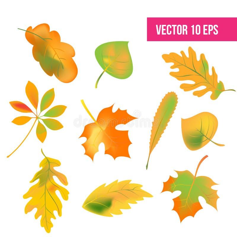 Le foglie di autunno hanno messo, isolato su fondo bianco Illustrazione di vettore foglie di autunno di caduta, pacchetto dell'ic royalty illustrazione gratis
