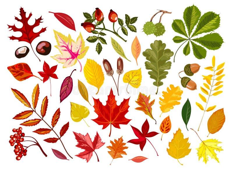 Le foglie di autunno luminose ed i dadi maturi hanno isolato le illustrazioni illustrazione vettoriale