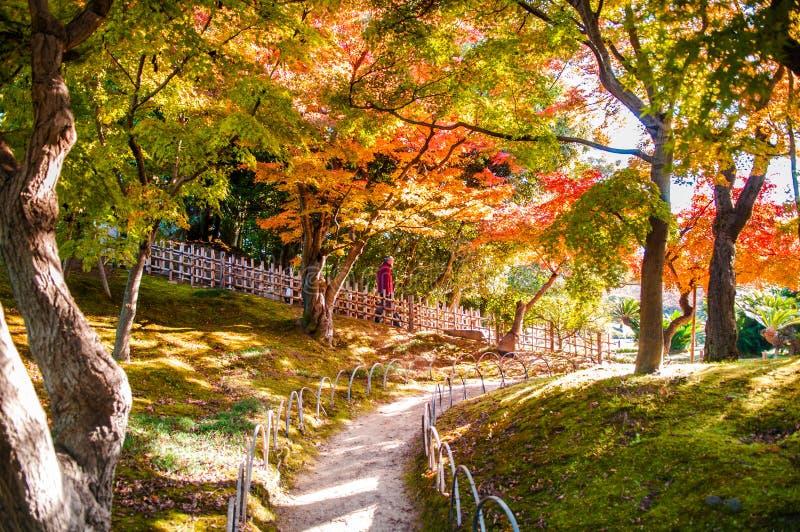 Le foglie di autunno nel castello di Okayama parcheggiano, il Giappone fotografia stock