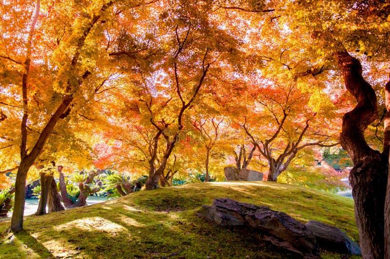 Le foglie di autunno nel castello di Okayama parcheggiano, il Giappone fotografia stock libera da diritti