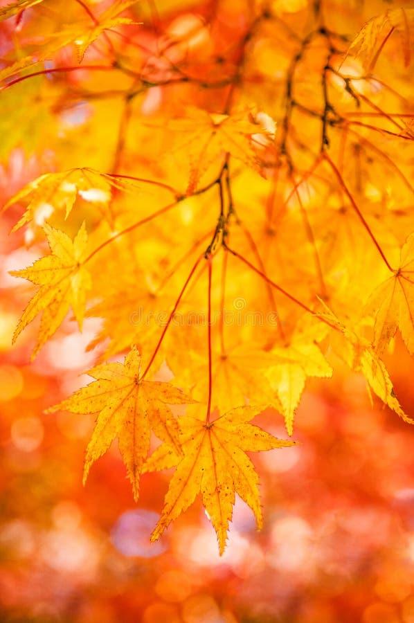 Le foglie di autunno nel castello di Okayama parcheggiano, il Giappone immagini stock libere da diritti