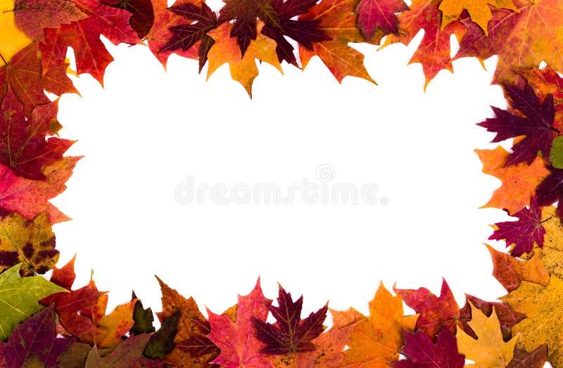Le foglie di autunno rasentano il fondo bianco fotografia stock