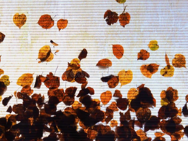 Le foglie di autunno sono caduto su un tetto trasparente fotografia stock libera da diritti
