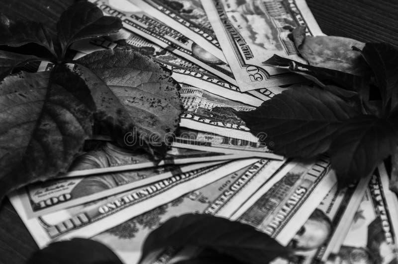 Le foglie di autunno sono sparse nei dollari, in un motivo in bianco e nero immagine stock libera da diritti