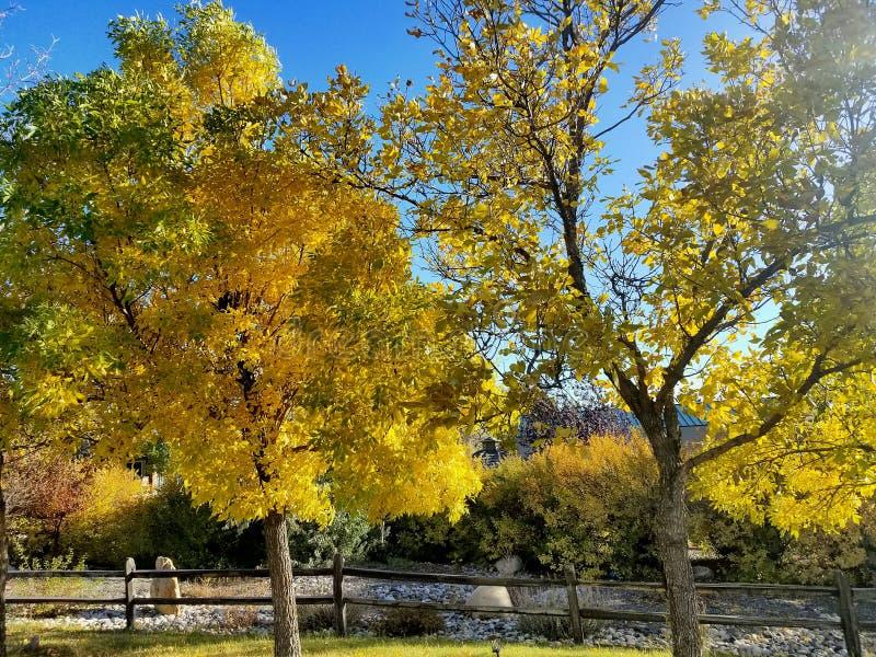 Le foglie di caduta girano e vanno recinto di legno immagine stock libera da diritti