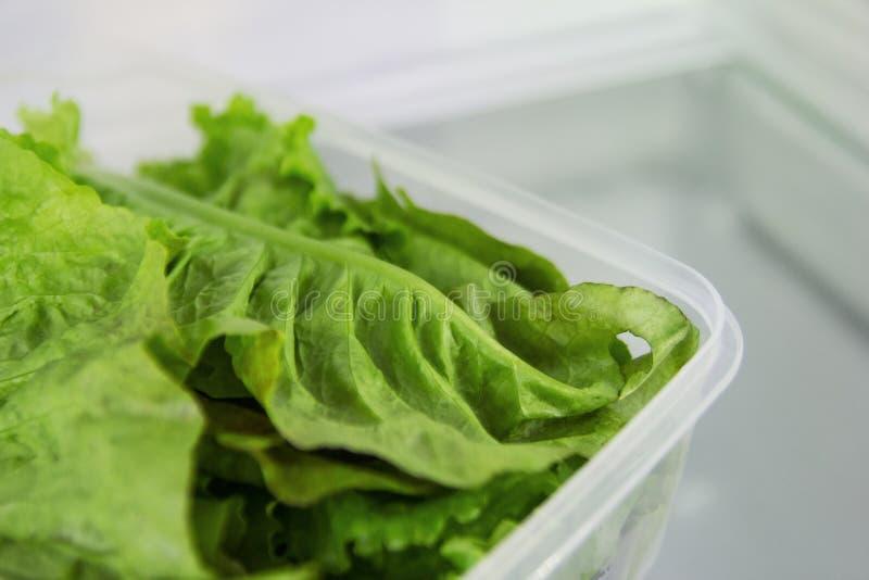 Le foglie di insalata verde nel recipiente di plastica su uno scaffale di un frigorifero fotografie stock libere da diritti