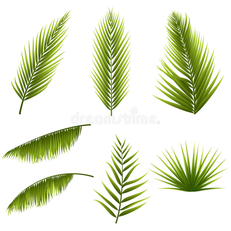 Le foglie di palma verdi tropicali realistiche hanno messo isolato su fondo bianco Flora esotica della giungla Elementi per il vo illustrazione vettoriale