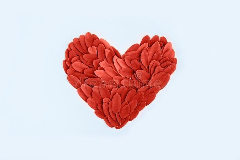 Le foglie fresche hanno modellato il cuore ed hanno tonificato il colore di corallo vivente su fondo pastello blu Colore dei 2019 fotografia stock