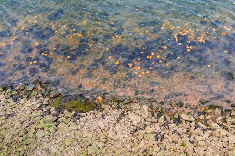 Le foglie giallo arancione della foglia di acero del fiume dell'acqua scorrono sfondo naturale di autunno di caduta fotografia stock libera da diritti