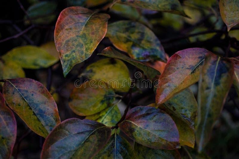 Le foglie multicolori hanno acceso da ora a novembre la pioggia fotografia stock
