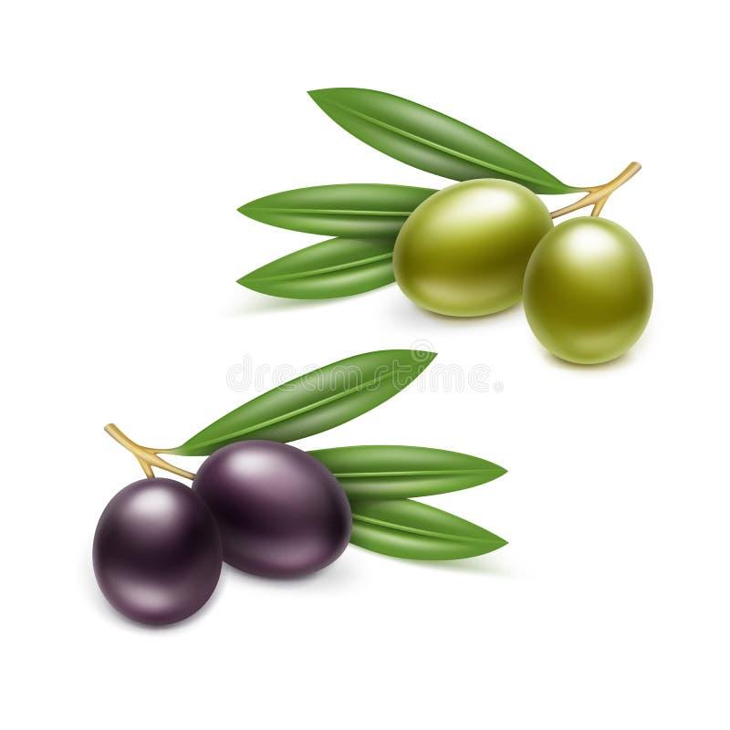 Le foglie nere dei rami di olive verdi hanno isolato il bianco royalty illustrazione gratis