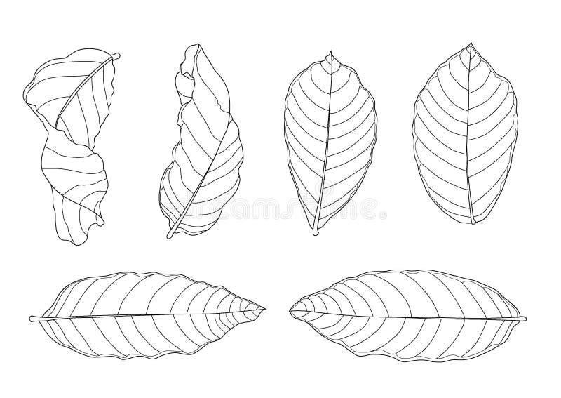 Le foglie scheletriche asciugano la foglia hanno allineato la progettazione ed il nero asciutto delle bande delle foglie porta pe illustrazione vettoriale