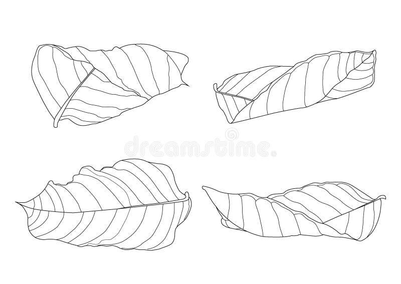 Le foglie scheletriche asciugano la foglia hanno allineato la progettazione illustrazione di stock