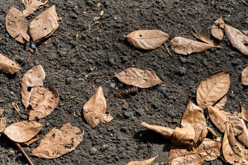 Le foglie secche giallastre cadono su asfalto nero durante i giorni caldi immagine stock