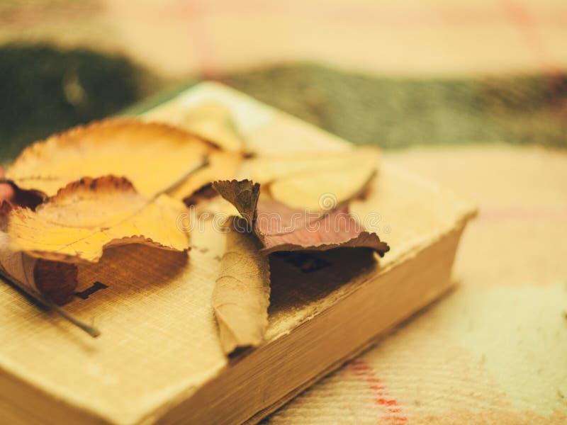 Le foglie sul libro immagini stock