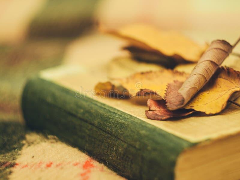 Le foglie sul libro fotografie stock libere da diritti